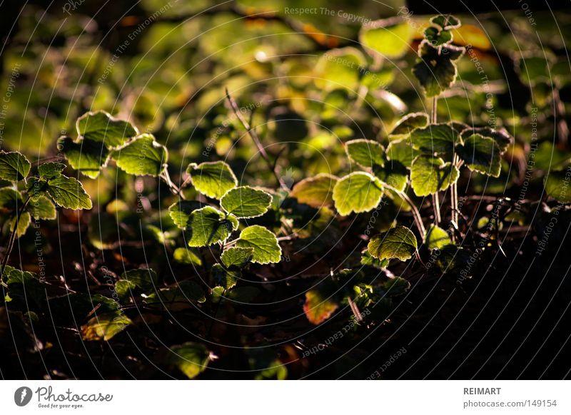 fünfzehn Sommer Boden Erde Schatten grün braun klein