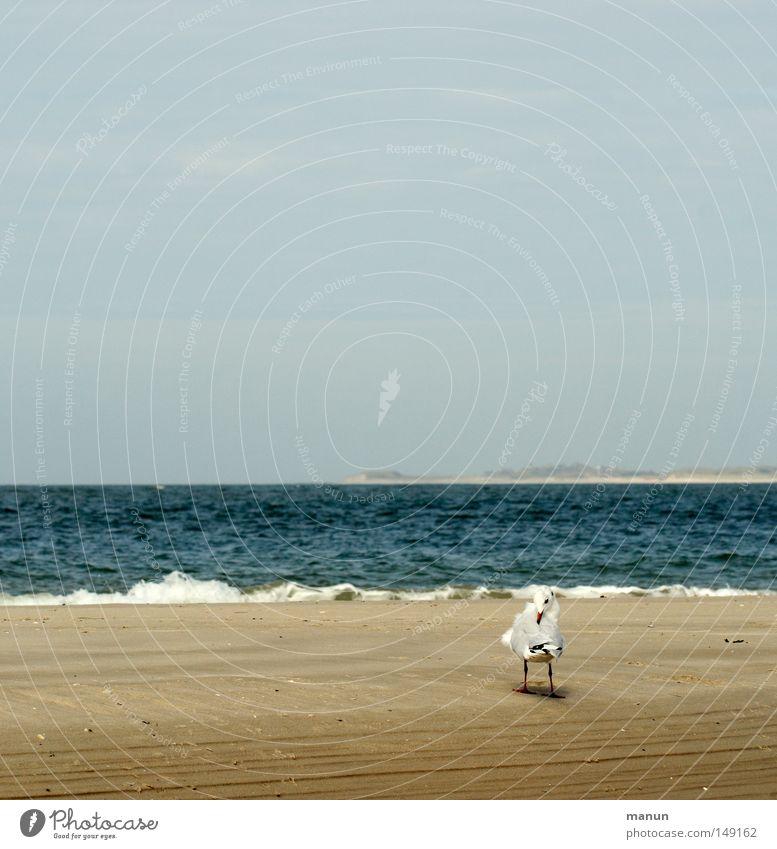 wen juckt's ... Himmel blau Wasser weiß Sommer Meer Strand ruhig Erholung gelb Herbst Küste Sand Luft Vogel braun