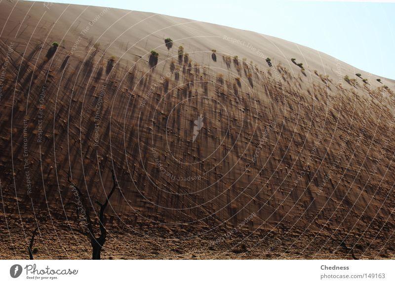 Schattenflucht.. Himmel Baum blau Wärme Sand braun Erde Treppe Afrika Wüste Physik heiß Düne Namibia Akazie