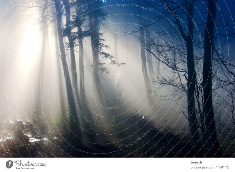 the mIst I Natur Baum blau ruhig schwarz Wald dunkel kalt Herbst grau Landschaft Nebel trist gruselig feucht Klima