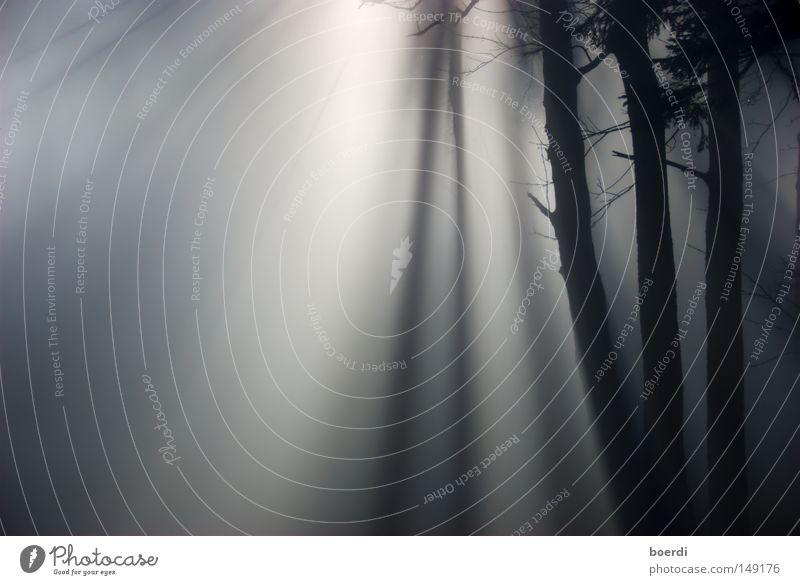 the mIst II Natur Baum schwarz Wald dunkel kalt Herbst grau Landschaft Nebel trist gruselig feucht mystisch unheimlich November