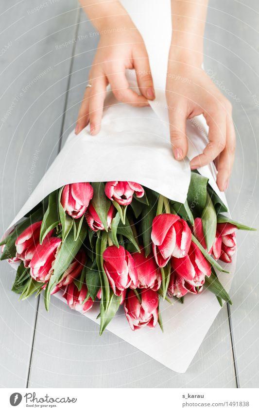 Tulpenstrauß Feste & Feiern Valentinstag Muttertag Geburtstag feminin Hand Blume Arbeit & Erwerbstätigkeit festhalten Freundlichkeit Fröhlichkeit frisch schön