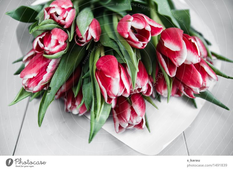 Blumenstrauß mit Tulpen Pflanze Duft Fröhlichkeit frisch rosa Sympathie Verliebtheit Romantik Freundschaft Frühling April Jahreszeiten Blüte Bündel Markt