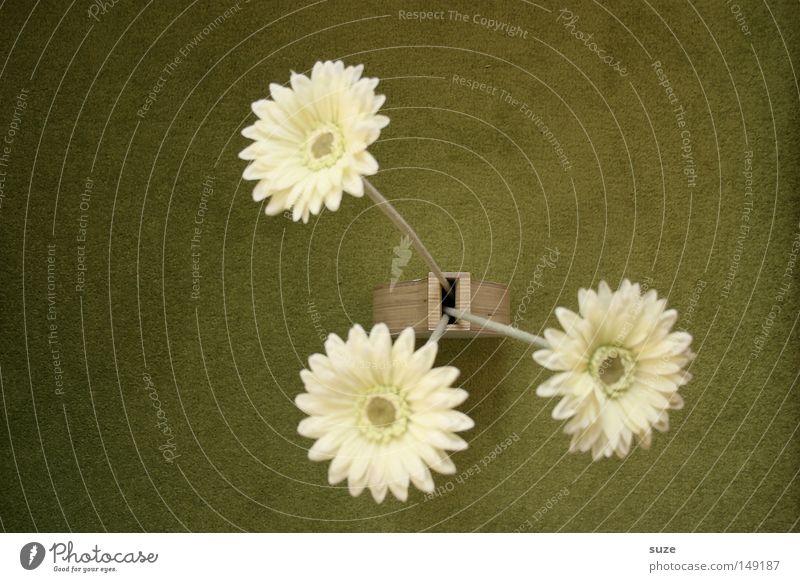 Gerberasen Lifestyle Stil Design Häusliches Leben Innenarchitektur Dekoration & Verzierung Kunst Kultur Herbst Blume Blüte ästhetisch elegant schön trist