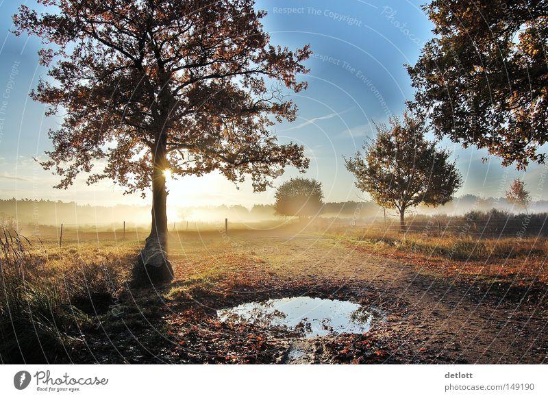Frühes Erwachen Natur Heide Baum Sonne Himmel Sonnenaufgang Pfütze wandern Nebel Herbst Oktober November Spaziergang verfallen Ferne blau Morgen Wege & Pfade