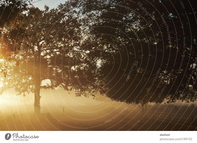 Morgenstund… Natur Baum Sonne Herbst Beleuchtung Nebel Sonnenaufgang gold November Oktober Himmelskörper & Weltall Heide