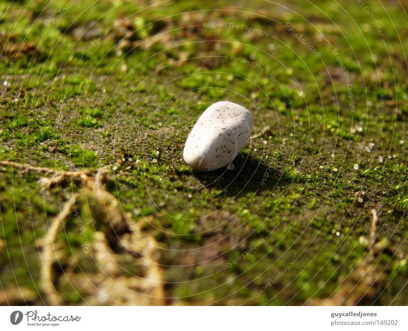 Stein Sommer Umwelt Natur Frühling Schönes Wetter Pflanze Moos schön Steinboden weiß hell rund Menschenleer Farbfoto 1 Außenaufnahme Nahaufnahme Makroaufnahme