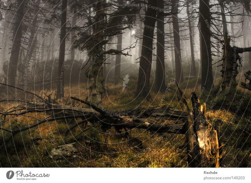 düstere aussichten II Sturm Wald Blatt Nebel kalt Pause wandern Baum Nadelwald Fichte dunkel Aussicht Hügel Schuhe Wanderschuhe Holz Natur Bergsteigen Baumrinde