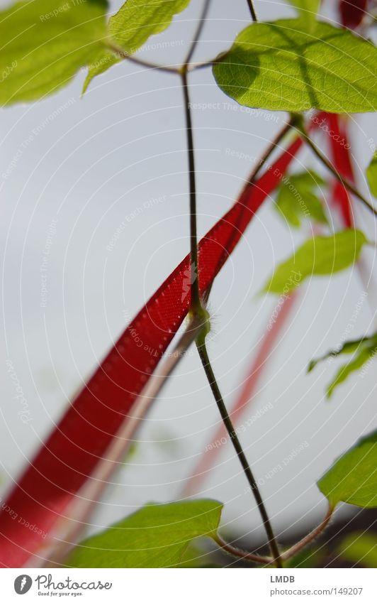 Der sprichwörtliche Rote Faden Himmel grün Pflanze rot Blatt Glück Erfolg Wachstum Zukunft Klettern zart Schnur Symbole & Metaphern leicht aufwärts aufsteigen