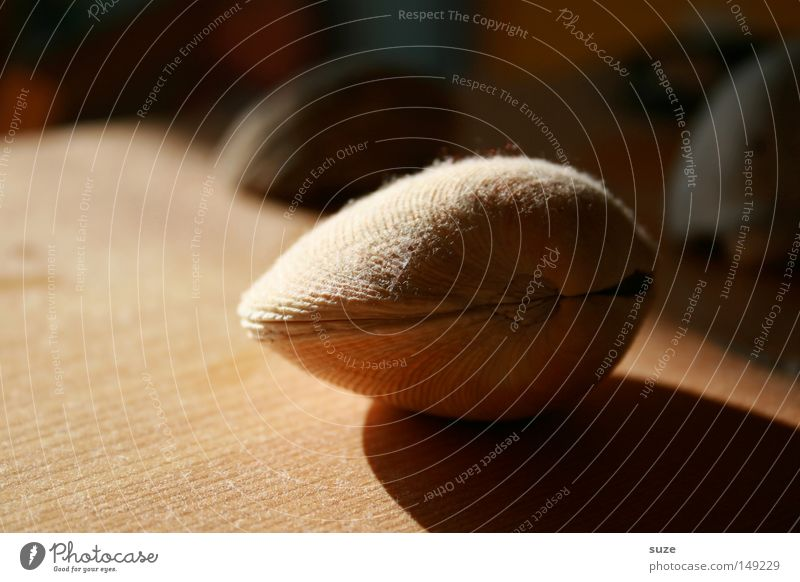 Doppeldecker schön ruhig liegen Dekoration & Verzierung Strahlung Sammlung Muschel Staub Erinnerung Souvenir Lichteinfall Muschelschale Muschelform