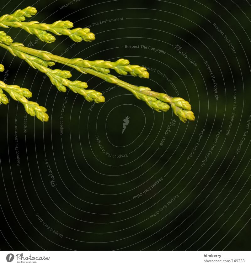 black forrest Zweig Trieb grün Natur Makroaufnahme Wachstum Frühling Umwelt Umweltschutz Sauerstoff Luft gedeihen Nahaufnahme Duft ruhig friedlich Jungpflanze