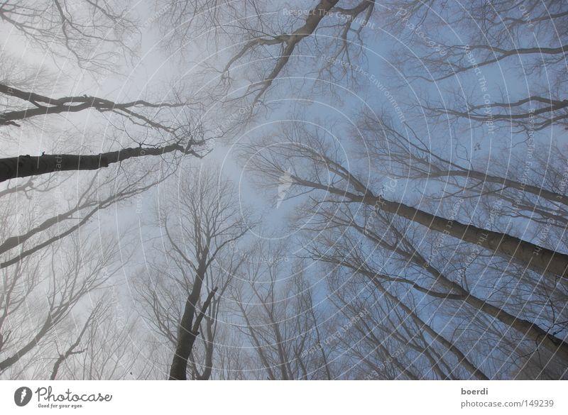bAumkreuz Himmel Baum blau Wald kalt Herbst oben Nebel Froschperspektive Christliches Kreuz unten aufwärts mystisch Zauberei u. Magie kahl