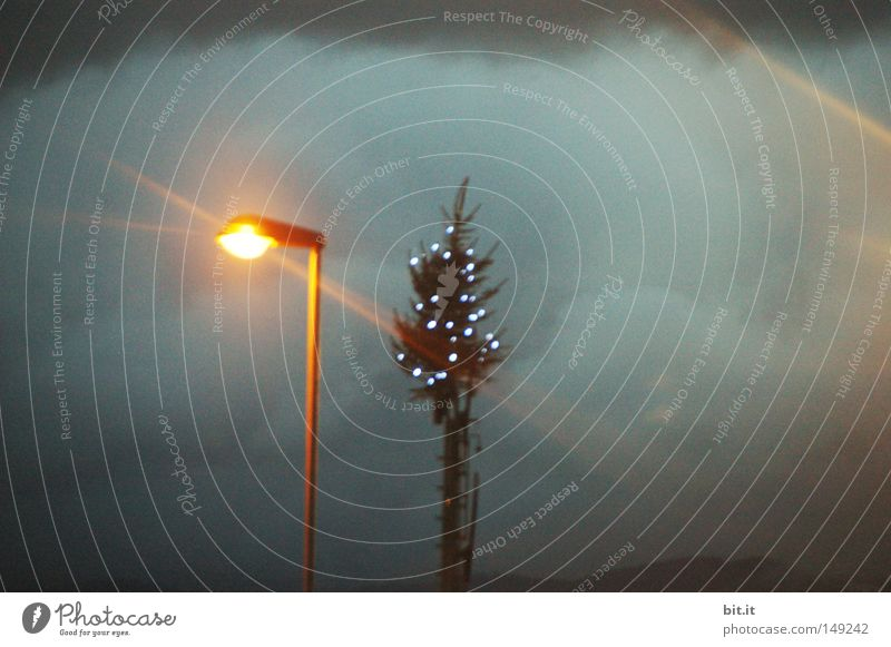 HOCH TANNENBAUM Himmel Weihnachten & Advent blau Wolken Winter dunkel Traurigkeit Lampe hell glänzend Klima Weihnachtsbaum Laterne Unwetter Tanne