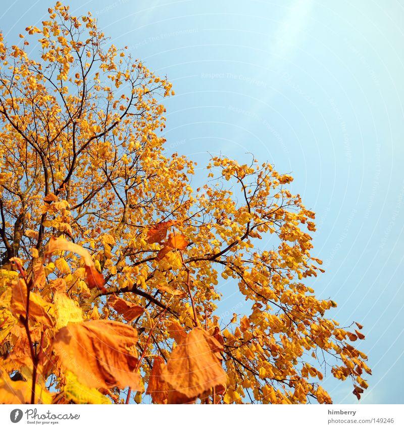 fire & ice Natur Himmel Baum grün Blatt gelb Herbst Park Hintergrundbild gold Ausflug Abenddämmerung Heimat Feierabend Kurzurlaub