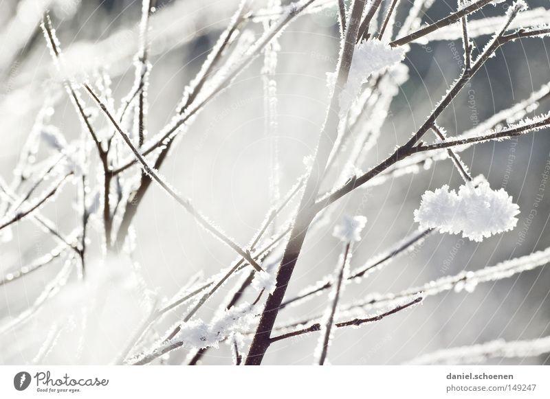 neue Weihnachtskarte 11 Natur Himmel weiß Winter kalt Schnee hell Hintergrundbild Wetter Ast Raureif Schwarzwald Meteorologie
