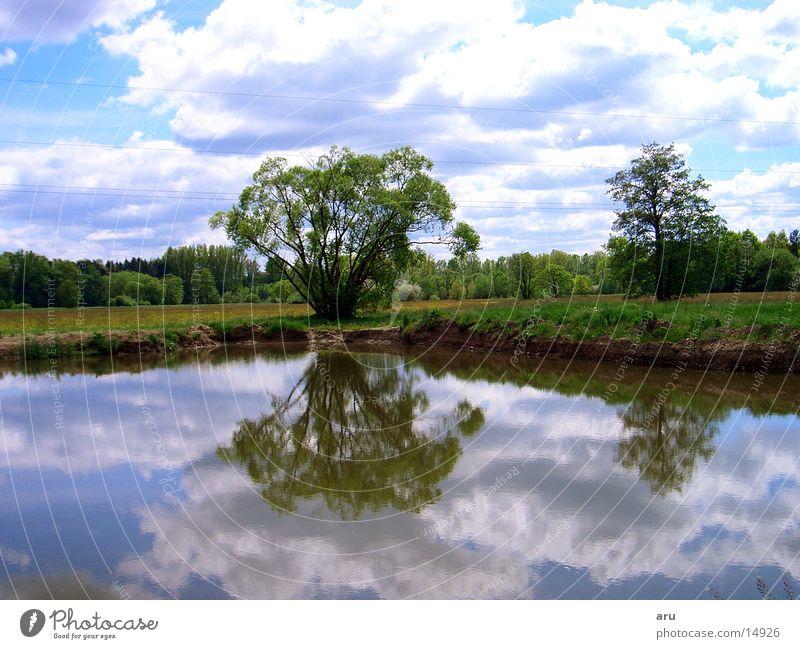 Spiegelung im See Natur Wasser Baum Wolken Küste Wasserspiegelung