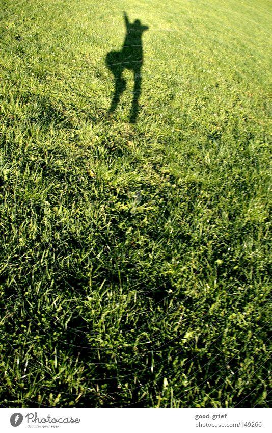 hoch hinaus Mensch Mann Freude Sommer Wiese Herbst oben springen Wärme Beine Luft klein Feld Arme fliegen Erfolg