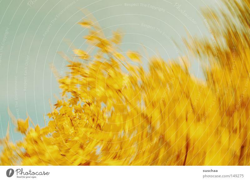 apfelstrudel Himmel Baum Blatt gelb Herbst rund Vergänglichkeit Dynamik Jahreszeiten abstrakt Wasserwirbel Verwirbelung Wirbelsturm
