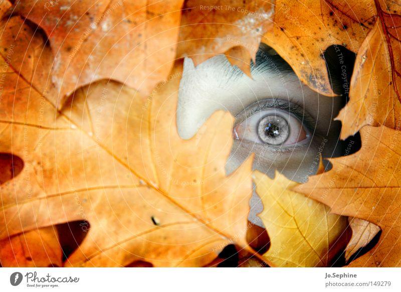 lost & forgotten Mensch maskulin Auge 1 Herbst Blatt beobachten Blick gruselig Angst Entsetzen Todesangst Platzangst verstört bizarr skurril Zombie untot Schock