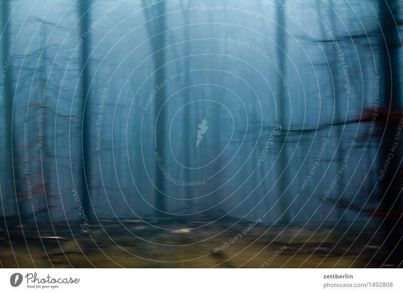 Wald Baum dunkel Nebel Textfreiraum geschlossen Baumstamm Dunst Märchen Forstwirtschaft unheimlich Waldlichtung Unterholz