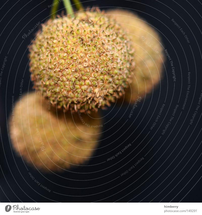 rabimmelrabammelrabumm Natur Baum Herbst Park Frucht Vergänglichkeit Samen kommen Schalen & Schüsseln