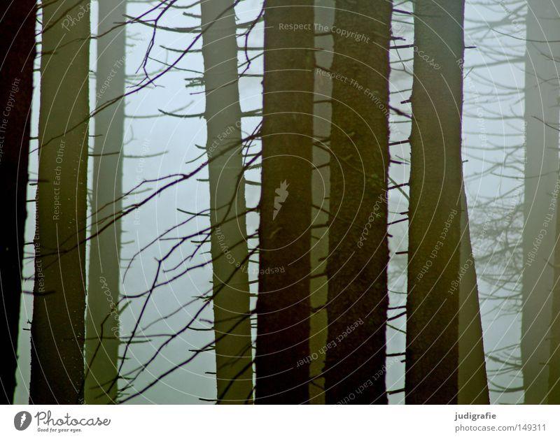 Dämmerung senkte sich von oben Natur Baum Winter Wald kalt Herbst Berge u. Gebirge wandern Nebel Umwelt mystisch Dunst November Harz