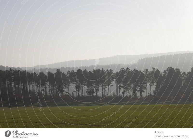 Der Wald steht schwarz und schweiget... Himmel Natur Baum Landschaft Umwelt Herbst Feld Nebel stehen Kiefer Nadelbaum aufgereiht