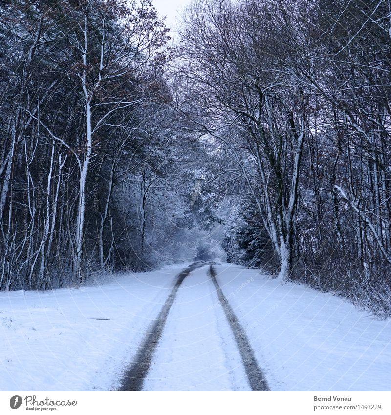 schnee im quadrat Umwelt Natur Landschaft Winter Klima Wetter schlechtes Wetter Eis Frost Schnee Baum Wald Verkehr Verkehrswege Autofahren Straße Wege & Pfade
