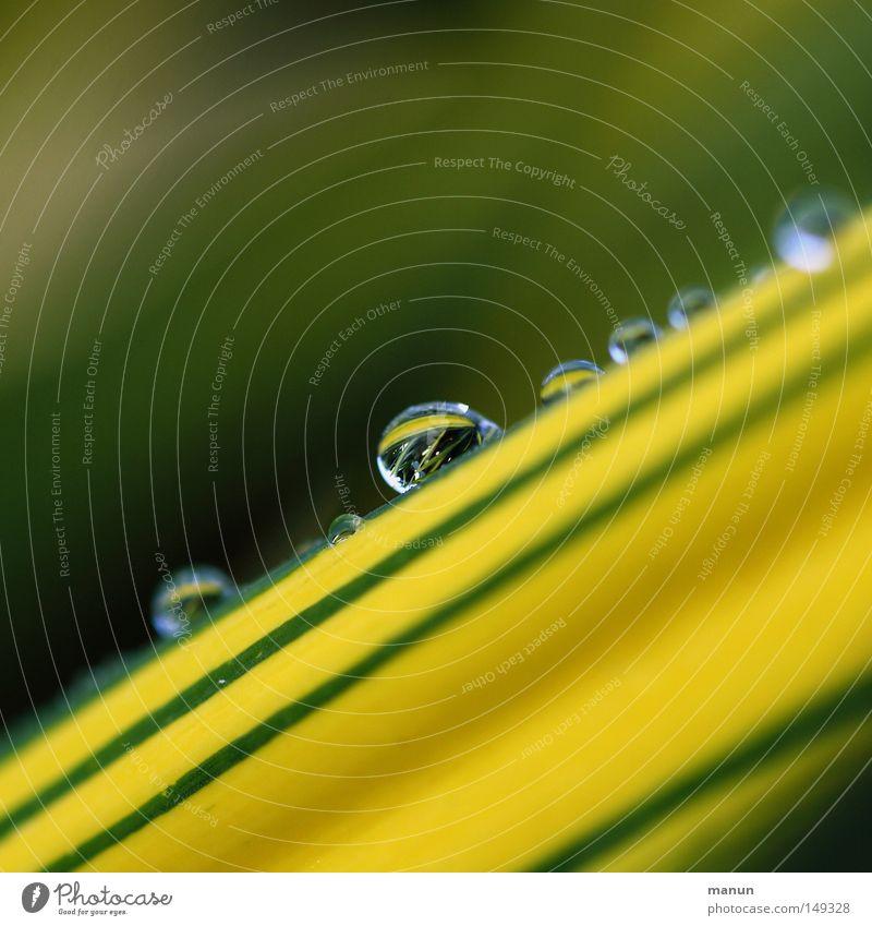 Brasilia Natur Wasser schön grün Pflanze Sommer gelb Lampe kalt Herbst Frühling Park Regen Wetter Wassertropfen nass