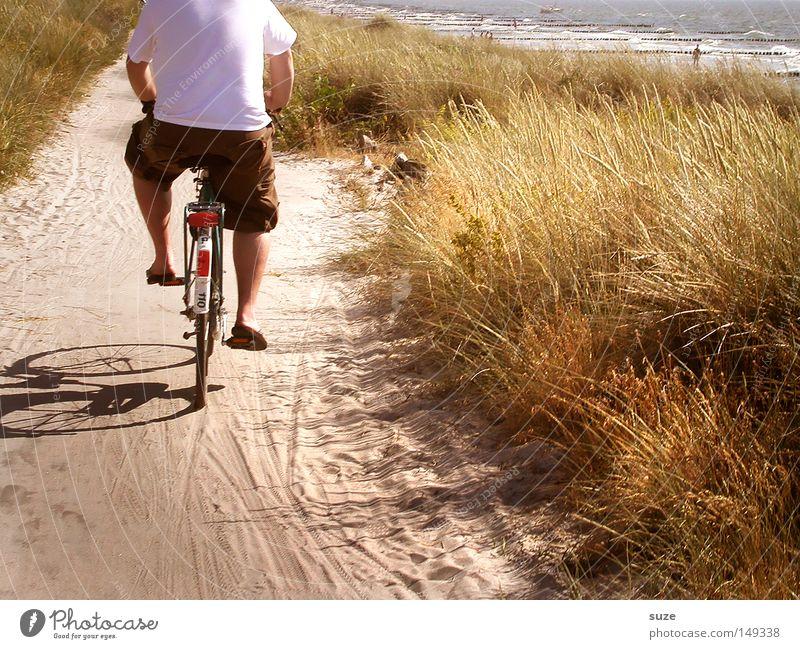 Hiddensee Erholung Ferien & Urlaub & Reisen Fahrradtour Sommer Sommerurlaub Strand Meer Mensch maskulin Mann Erwachsene Rücken 1 Umwelt Natur Landschaft Erde