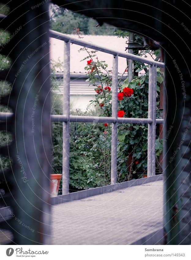 Rosengarten Blume grau Wege & Pfade Kraft Metall modern Industriefotografie Vergänglichkeit Steg Gegenteil Symmetrie Durchblick immer Briefmarke
