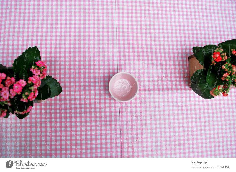 blind date Blume Tisch kariert rot weiß orange Dekoration & Verzierung Tischdekoration verschönern Café Restaurant Decke Astern Gratulation Jubiläum Geburtstag
