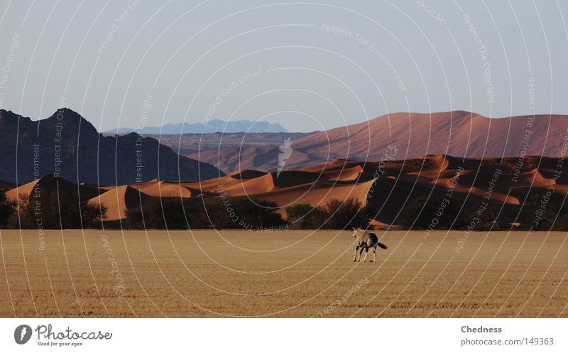 Ein gutes Stück Fleisch Wüste Namibia Steppe Spießbock Düne Berge u. Gebirge Hügel Landschaft Sand trocken heiß Wärme offen Geschwindigkeit Wildtier Wildfleisch