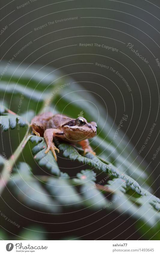 den Überblick behalten Natur Pflanze grün Blatt ruhig Tier Wald Umwelt Glück klein braun oben Wildtier warten beobachten Hoffnung