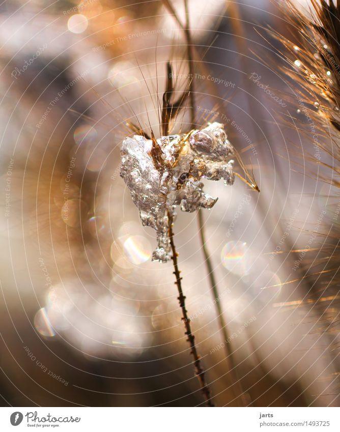 winterzeit Pflanze Wasser Winter Schönes Wetter Eis Frost Schnee Gras Sträucher Garten Feld außergewöhnlich elegant fest frisch glänzend hell kalt natürlich
