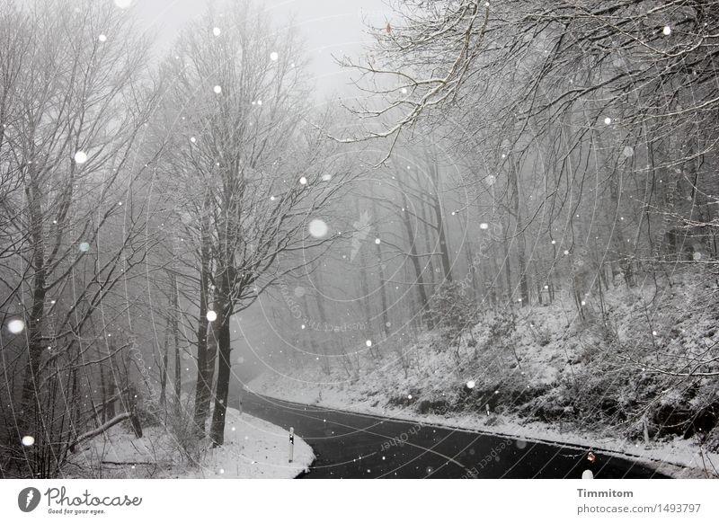 Unterwegs. Natur Ferien & Urlaub & Reisen Blatt Winter Wald schwarz Straße natürlich grau Schneefall Wetter Nebel Kurve