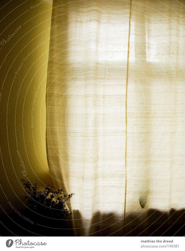 SCHÖNER WOHNEN Fenster Fensterrahmen Fensterscheibe Durchblick Aussicht durchsichtig Glas Scheibe Glasscheibe Fensterbrett Fensterkreuz Vorhang Schleier Gardine