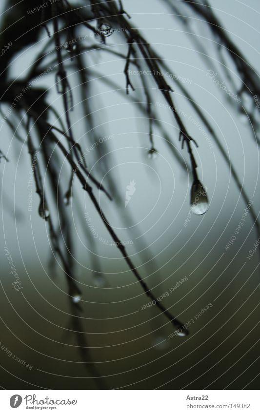 tropfenarme Winter Seil Pflanze Wasser Wassertropfen Herbst Nebel Regen Baum Sträucher Wiese Feld Holz Tropfen nass grün Weide Halterung pflanzenhalterung