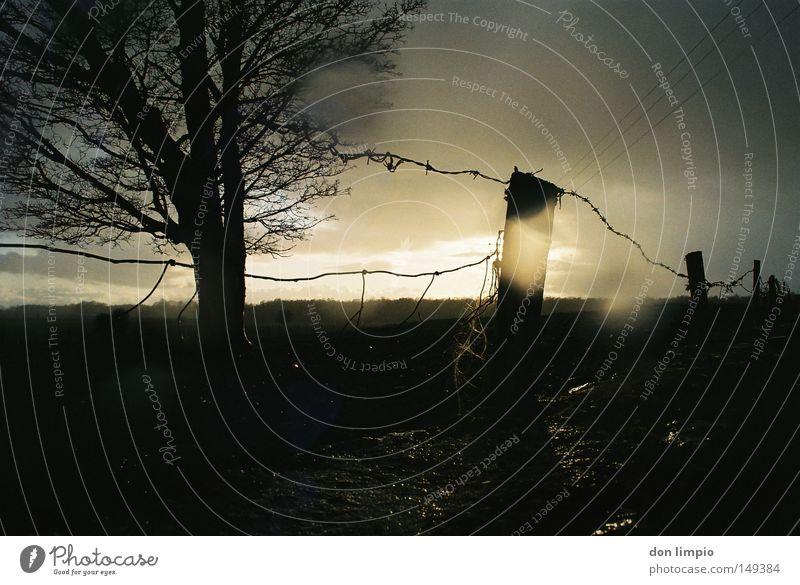 irgendwo draußen Länder Baum Stacheldrahtzaun Zaun Mauer schlechtes Wetter Regen Sturm Sonne Abwechselnd dunkel nass Republik Irland Gegenlicht beschlagen