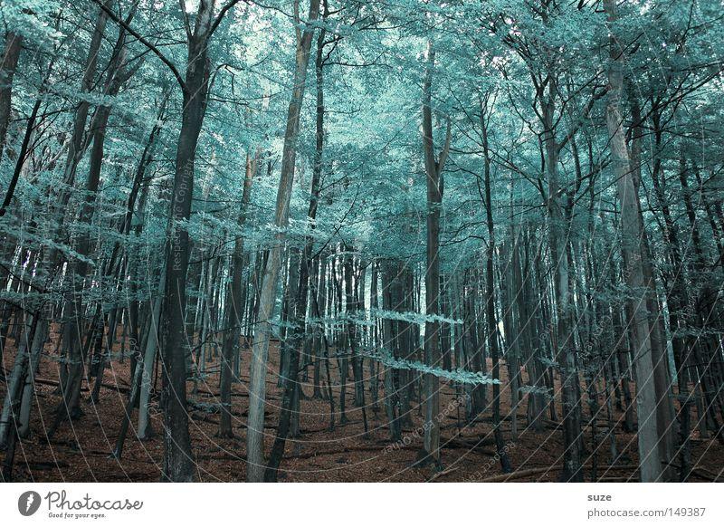 Waldstück Landwirtschaft Forstwirtschaft Umwelt Natur Landschaft Urelemente Erde Klima Baum Blatt Baumkrone Blätterdach Wachstum außergewöhnlich hoch kalt