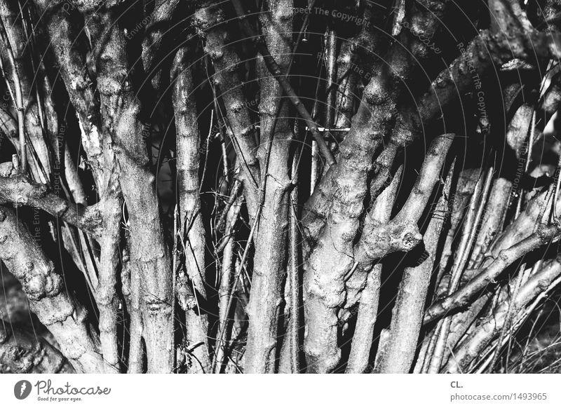 äste und zweige Natur Baum Umwelt Herbst Wachstum Ast Urelemente viele komplex