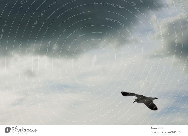 Schlechtwetterfront auf 11 Uhr Umwelt Natur Wetter schlechtes Wetter Tier Wildtier Vogel Möwe fliegen Wolken Reisefotografie grau gleiten Segeln Navigation