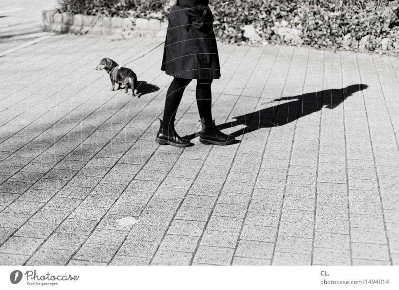 wo lang? Mensch Frau Hund Tier Erwachsene Leben Wege & Pfade feminin gehen Freizeit & Hobby Schönes Wetter Spaziergang Verkehrswege Haustier Mantel Orientierung