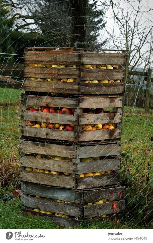 resterampe Natur Herbst natürlich Garten Lebensmittel authentisch Güterverkehr & Logistik Ernte Tradition Apfel reif Kiste Rest spät sparsam Plantage