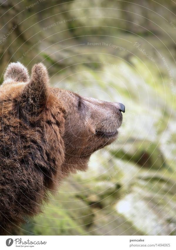 ein lächeln schenken Tier Wildtier Kommunizieren Lächeln Freundlichkeit Fell Bär Sprichwort