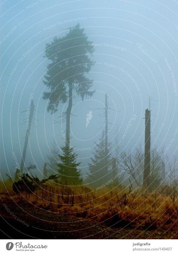 Dämmerung senkte sich von oben Wald Brocken Harz wandern Nebel Dunst Baum Baumsterben Waldsterben Natur Umwelt Herbst Winter kalt mystisch November