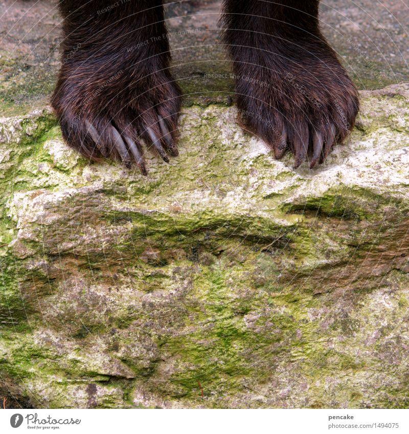 knapp daneben | abgrundtief Schlucht Tier Wildtier Krallen Pfote Zeichen Kraft Angst Bär Felsen Felsenschlucht Farbfoto Außenaufnahme Textfreiraum unten