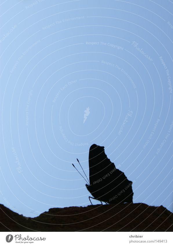Für Dorit blau schwarz Tier Erholung fliegen Luftverkehr Pause Flügel Schmetterling Fühler