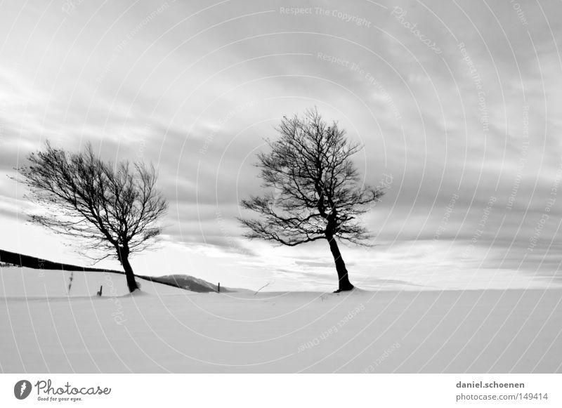 neue Weihnachtskarte 13 Himmel Natur weiß Baum Ferien & Urlaub & Reisen Winter Einsamkeit kalt Schnee Berge u. Gebirge Horizont Deutschland Wetter