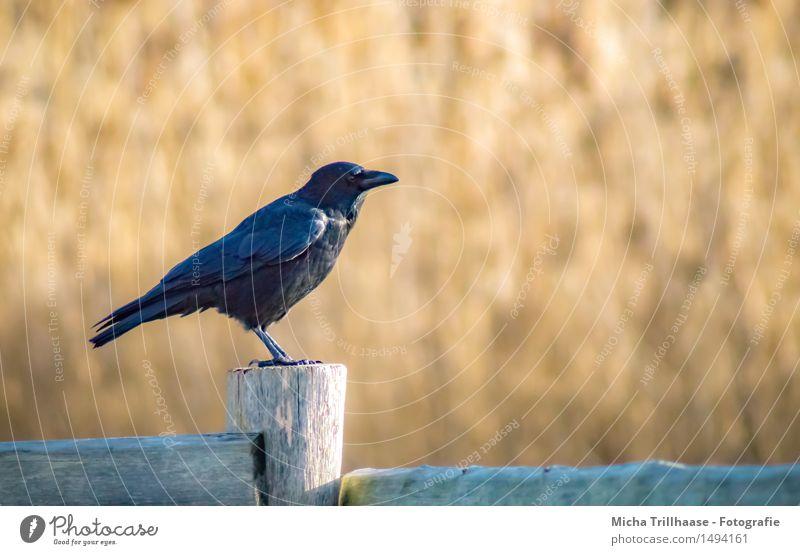 Kurze Rast Landwirtschaft Forstwirtschaft Umwelt Natur Tier Wildtier Vogel Flügel 1 Holz fliegen Blick sitzen warten Neugier schwarz Tierliebe Freiheit Leben